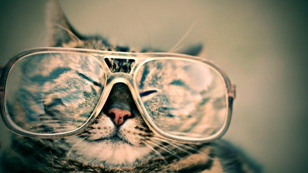 cat-984097_1280